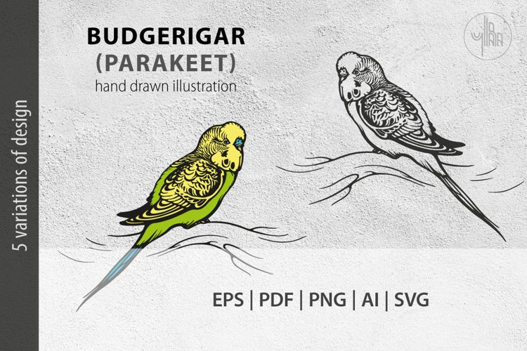 Budgerigar, Parakeet parrot, bird illustration, vector & PNG