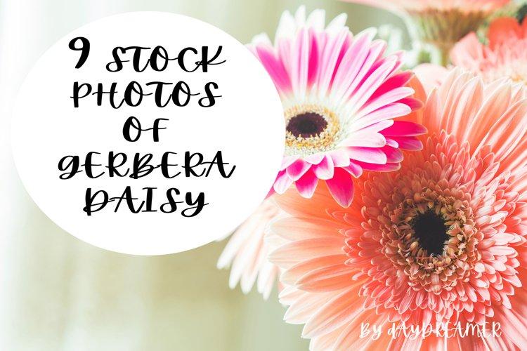 Gerbera daisy photo bundle