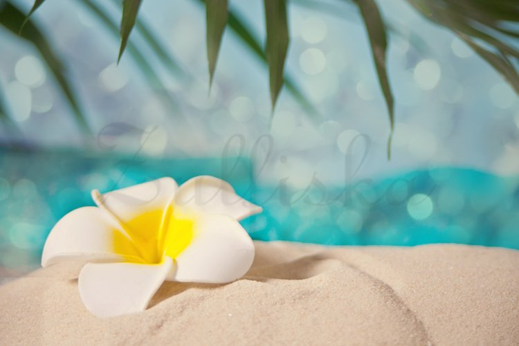 Exotic tropical flower on a white sand