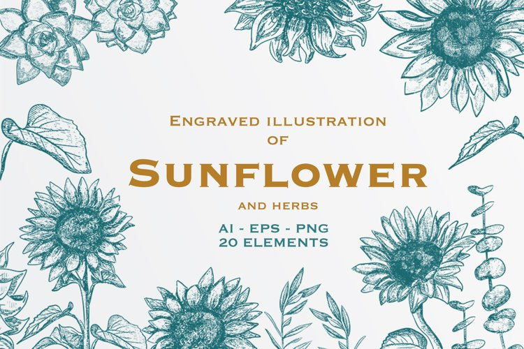The Sunflower Engraved style