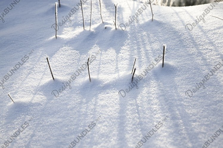 frozen plants example image 1