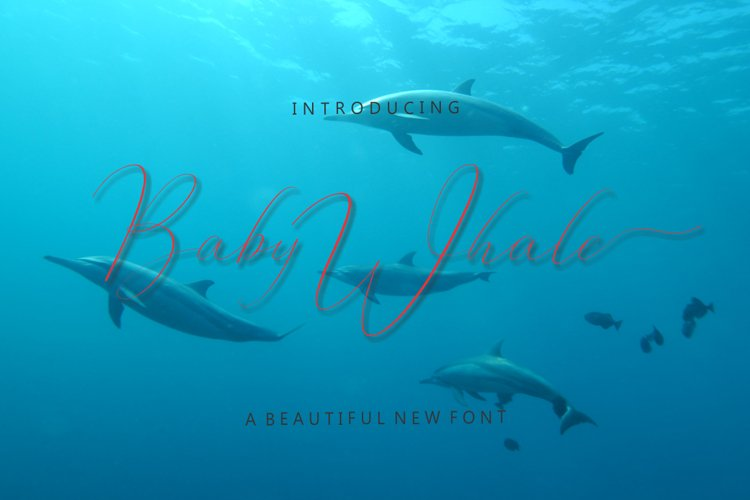 Baby Whale example image 1