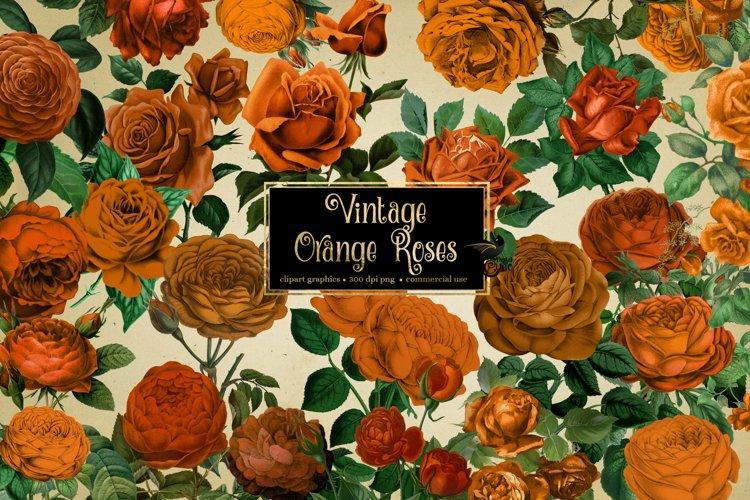 Vintage Orange Roses Clipart example image 1