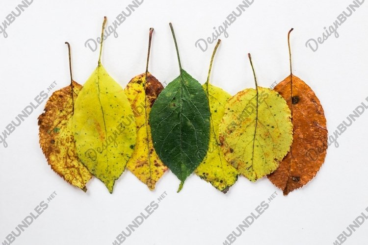 autumn season concept in colorful leaves example image 1