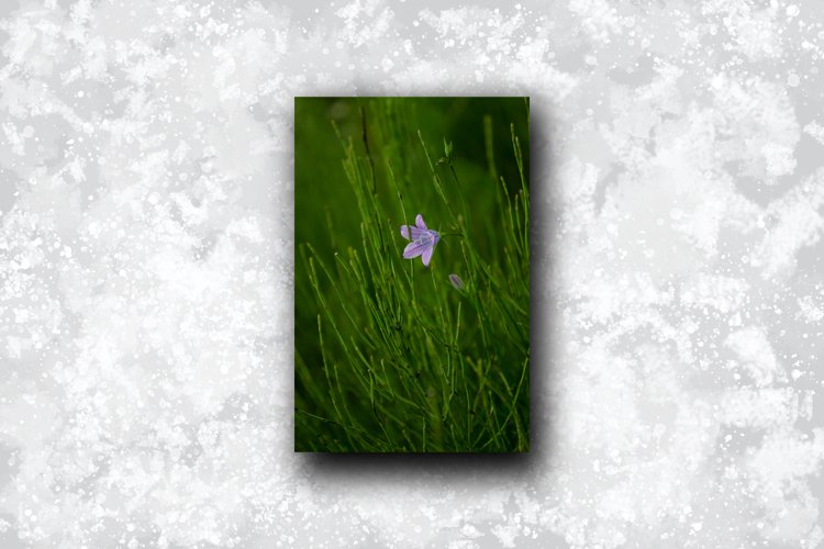 Blue bell flower in the thicket of grass