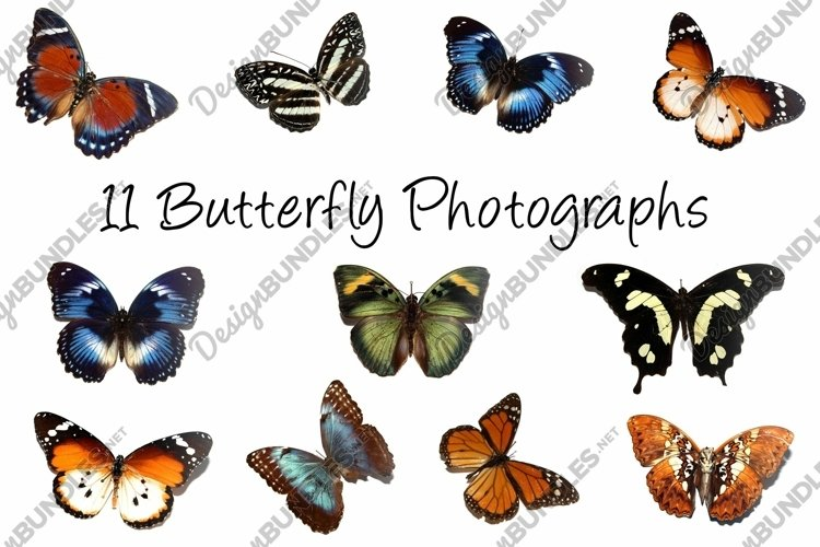 11 Butterfly Collection on White Background Lepidoptera example image 1