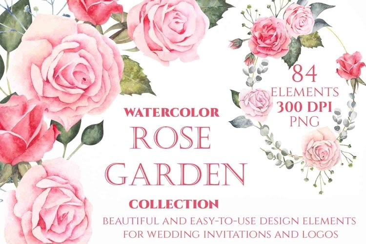 Watercolor Rose flowers for Wedding and Logo design