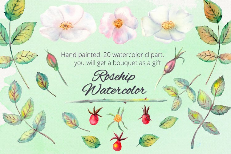 Rosehip. Watercolor clipart example image 1