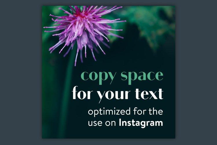 Instagram Photo Pack - Flora Vol. 1 example 5