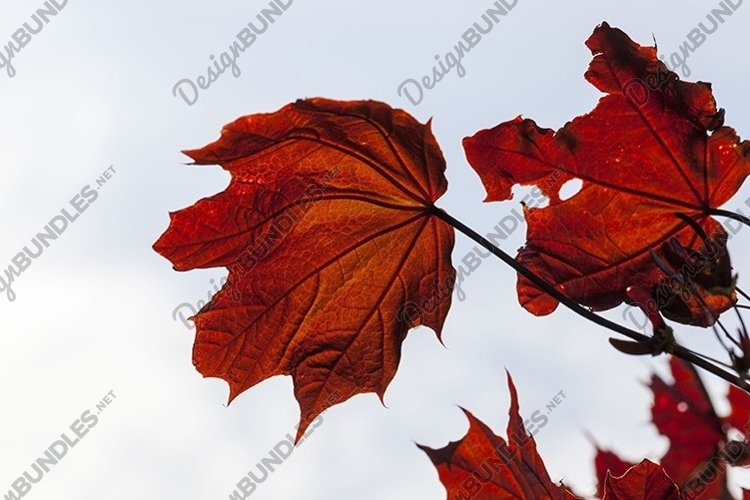 deciduous forest during leaf fall example image 1
