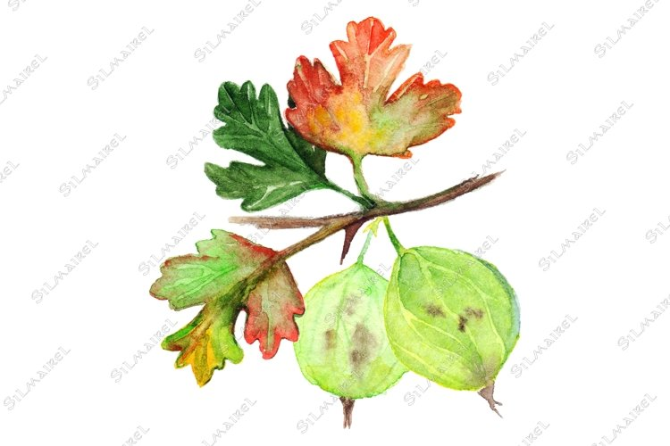 Watercolor green yellow orange gooseberry berry leaf branch example image 1