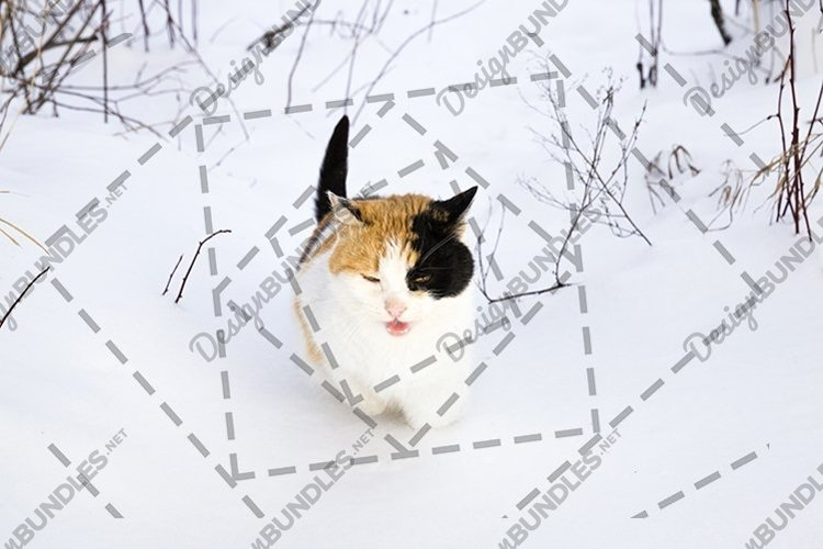 colorful cat in the winter example image 1