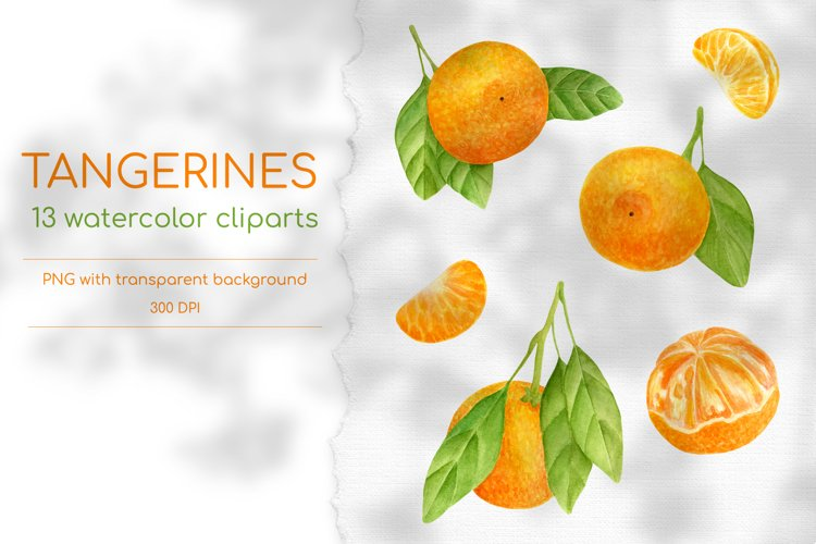 Tangerines - Hand drawn Watercolor clipart elements 300 DPI example image 1