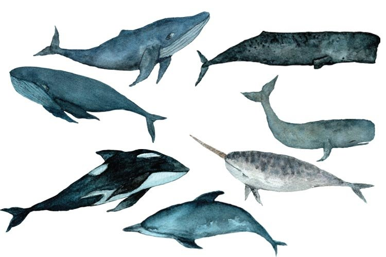 Cute Whale Watercolor Clipart Narval Watercolor