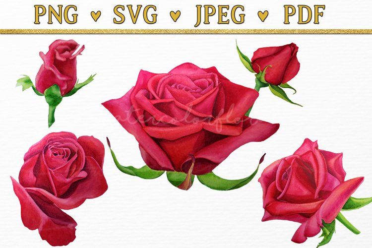 Red Rose Flowers Watercolor Floral Clipart svg, png, pdf