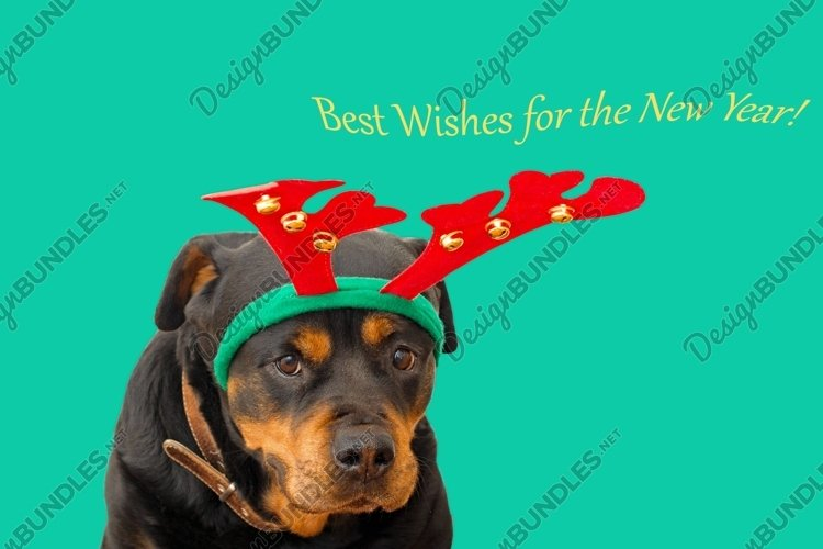 dog in christmas deer outfit