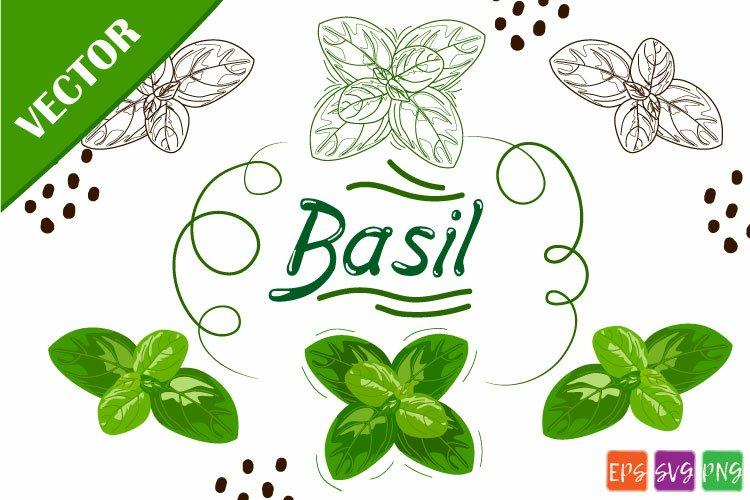 Basil SVG example image 1