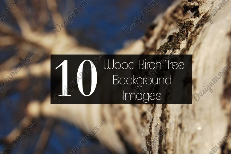 Wood Birch Tree Texture Background Stock Images