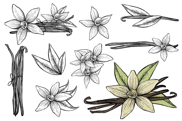 Vanilla sticks with flowers on white backgrounds. example image 1