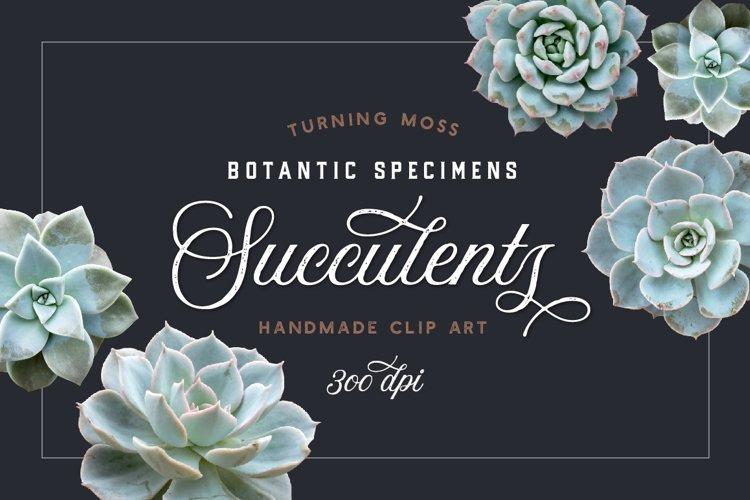 Succulents - Botanic Specimens - Realistic Isolated Objects