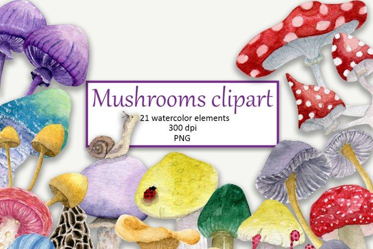 Watecolor mushrooms clipart PNG