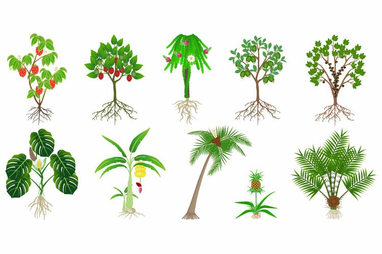 Set of exotic plants with fruits on a white background. example image 1