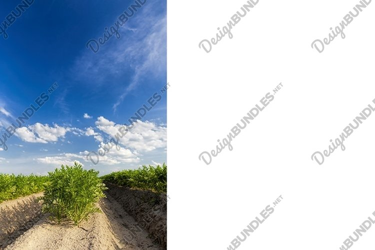 agricultural field with plants example image 1