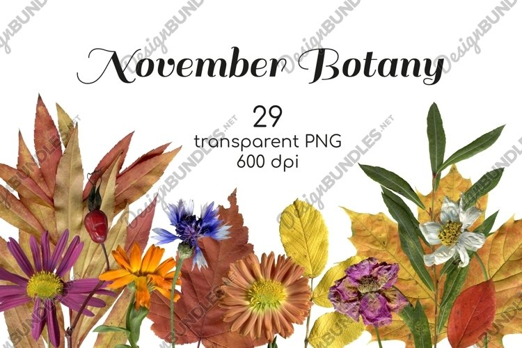 Fall flowers, herbs and leaves photo clipart Transparent PNG example image 1