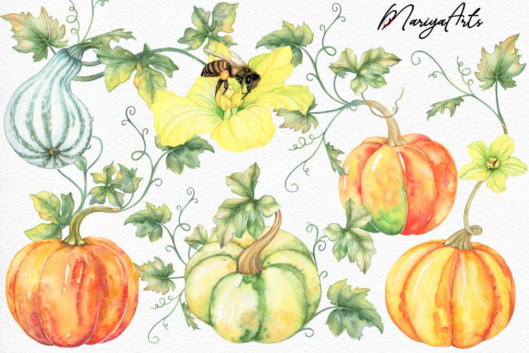 Pumpkins with Leaves, Autumn, Fall, Bee, Watercolor Clipart