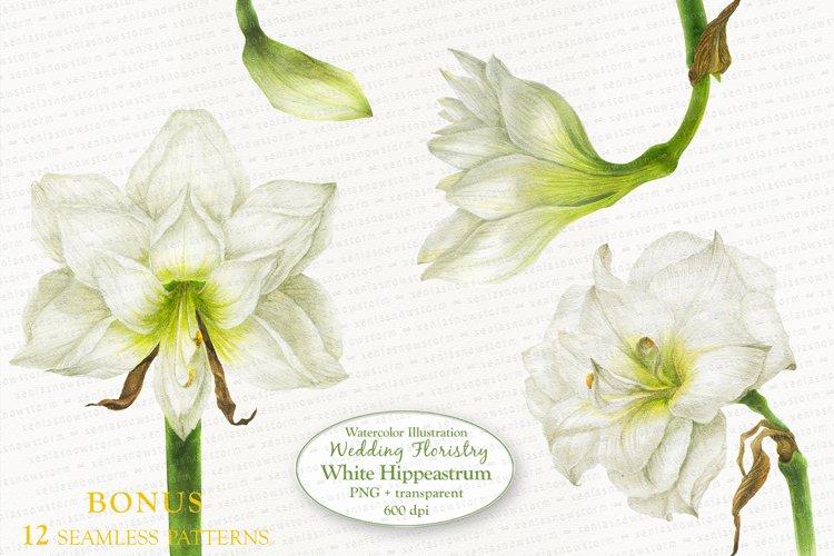 White Hippeastrum. Base Elements for Wedding Floristry. example image 1