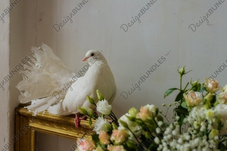 White pigeon among flowers . wedding dove. gold frame.