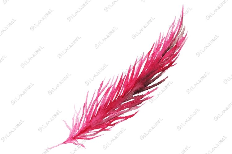 Watercolor pink purple crimson bird feather isolated example image 1