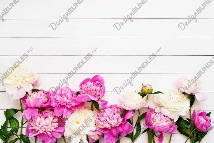 Floral background with beautiful pink white peonies example image 1