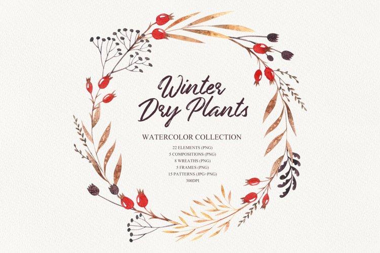 Winter dry plants example image 1