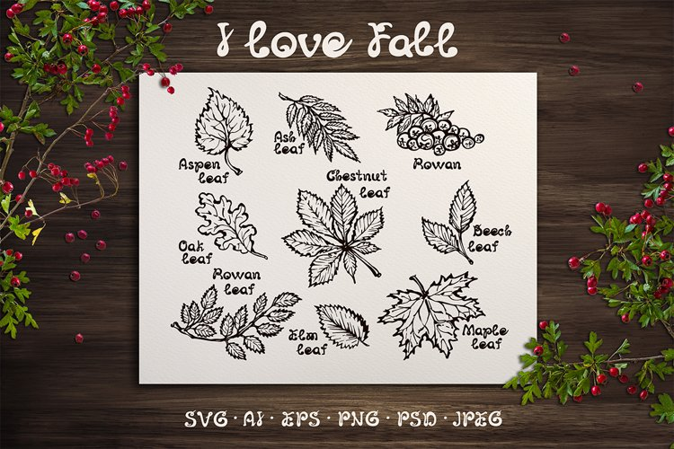 9 hand drawn fall leaves| SVG EPS AI JPEG PNG PSD example image 1
