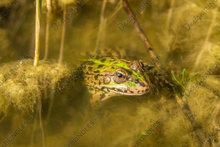 Swampy river and a frog example image 1