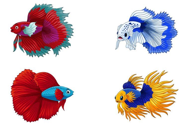Set of Four Siamese Fighting Fish Collection