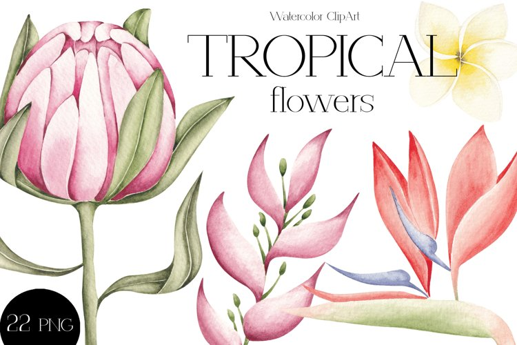 """Watercolor ClipArt """"Tropical Flowers example image 1"""