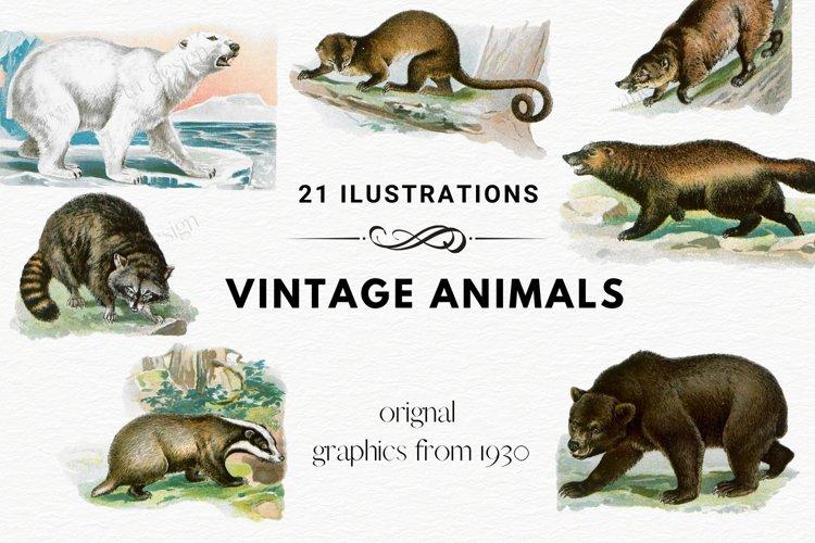 Antique Animal Clipart Set, Vintage Polar Bear Clipart