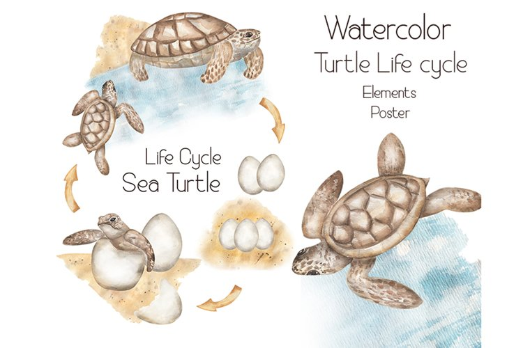 Watercolor Turtle Life Cycle