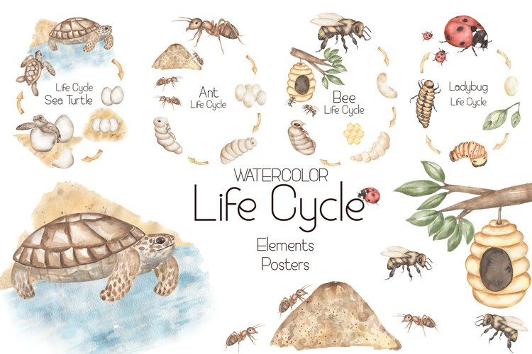 Watercolor Life Cycle Set example image 1