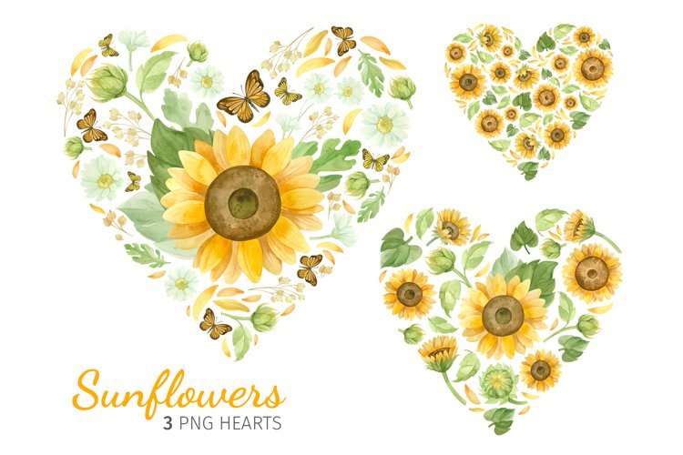 Sunflower png hearts, watercolor clipart