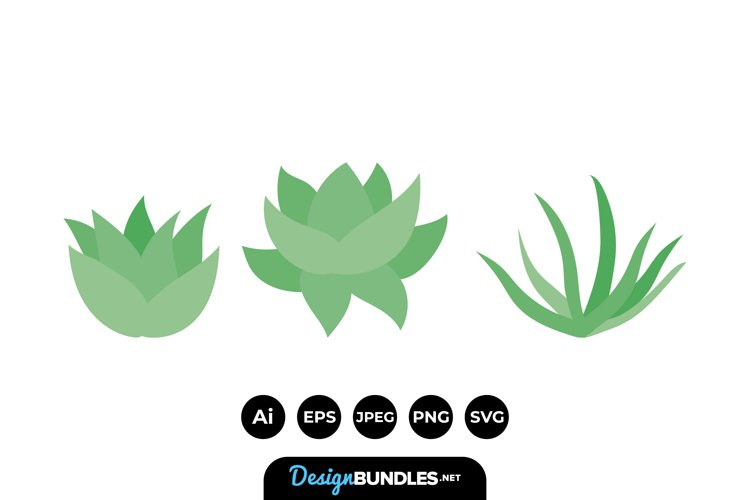 Succulent Illustrations example image 1