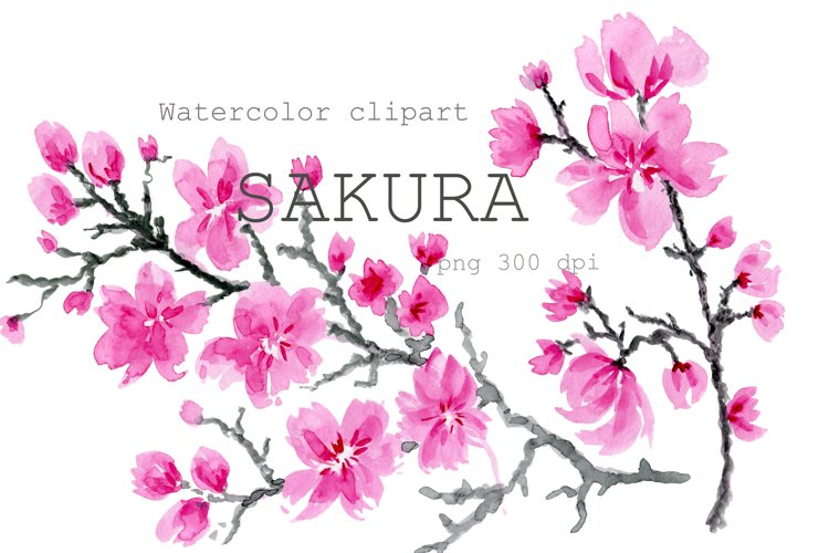 Watercolor clipart Cherry Blossom , flower Sakura.Blooming.