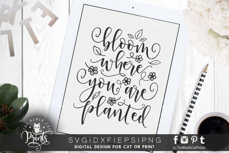 Bloom where you are planted SVG DXF PNG EPS