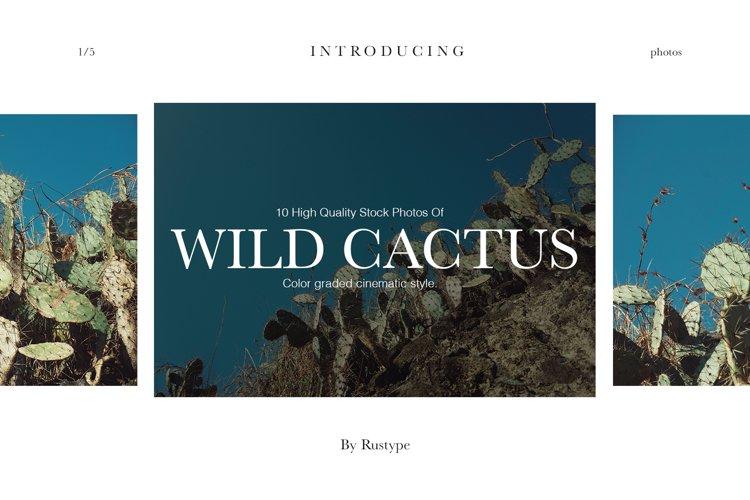 Wild Cactus with cinematic grading Stock Photos