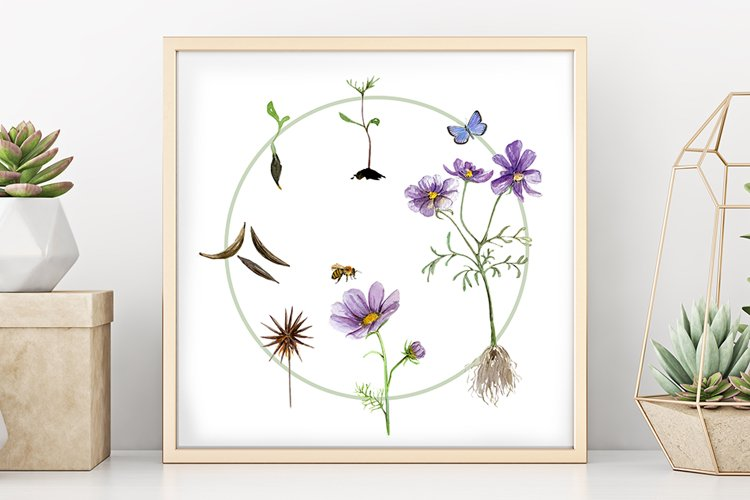 Flower Life Cycle Clip Art and Print