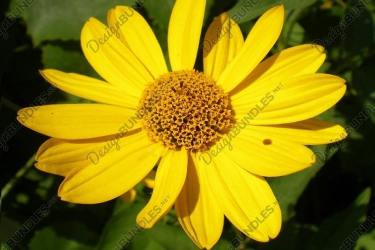 Yellow blossom example image 1