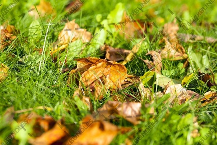 green grass and leaves example image 1