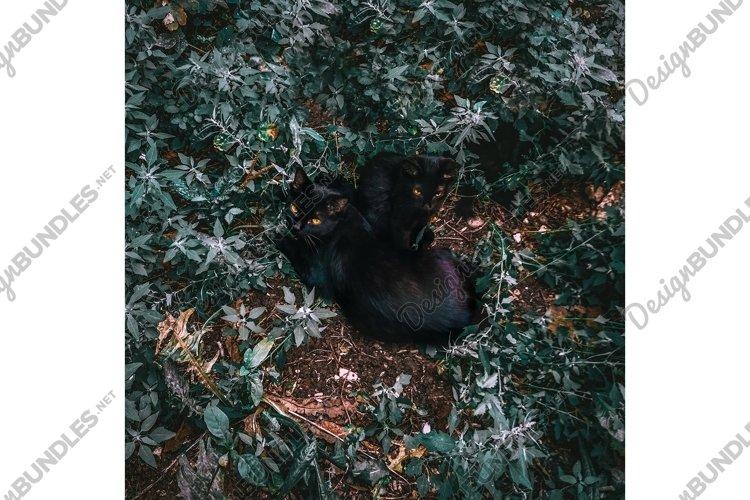 Two black cat animal grass nature summer evening night photo example image 1
